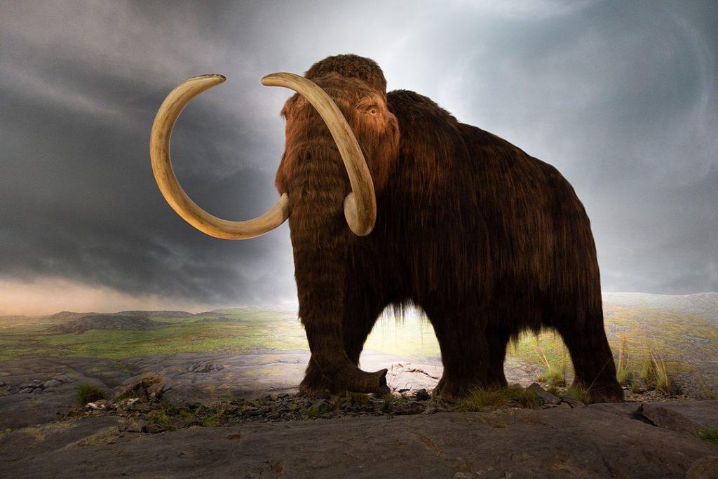 mamut extinto